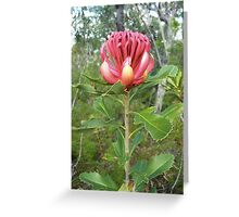 Red Torch Greeting Card