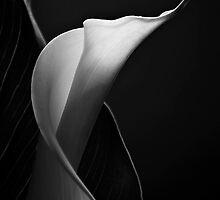 Sunlit  by Mieke Boynton