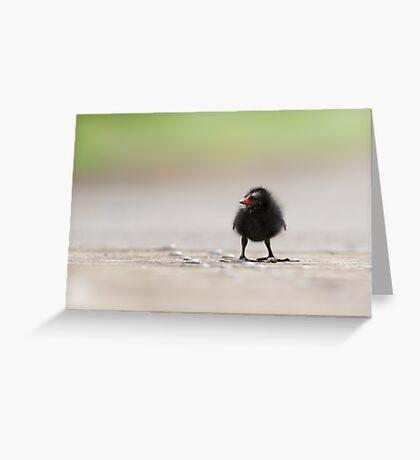 Moorhen Greeting Card