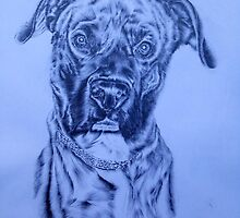 Boxer dog  by Lee Dickinson