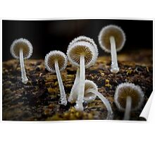 Fungi Season 1117  Poster