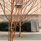Trees in a court yard by Mick Kupresanin