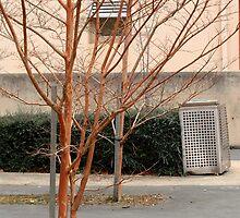 Trees in a court yard by Mick Kupresanin
