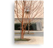 Trees in a court yard Metal Print