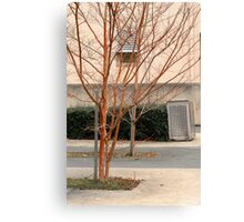 Trees in a court yard Canvas Print