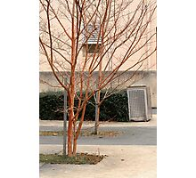 Trees in a court yard Photographic Print