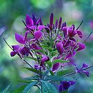 Vision in Purple by Astrid Ewing Photography