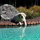Are You Sure I Can't Have a Quick Dip? by Gabrielle  Hope