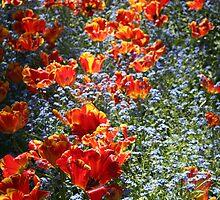 Orange Tulips 4 by KayEeGee
