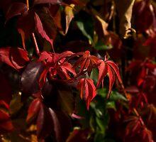 Autumn's Beautiful Colours by Denise Abé