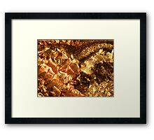 LOVE NATURE COLLECTION - HEART OF NATURE 4 HOLD ME CLOSE Framed Print