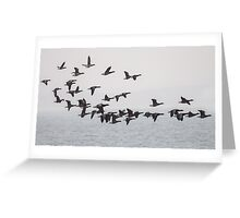 Brent Geese Greeting Card
