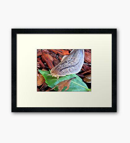 SLUG - On the Prowl Framed Print