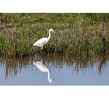 Little Egret Photographic Print