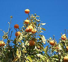 Tangerine tree by KatrinKirieshka