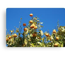 Tangerine tree Canvas Print