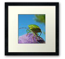 Stinkin Bug..... Framed Print