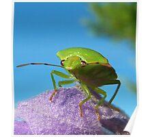 Stinkin Bug..... Poster