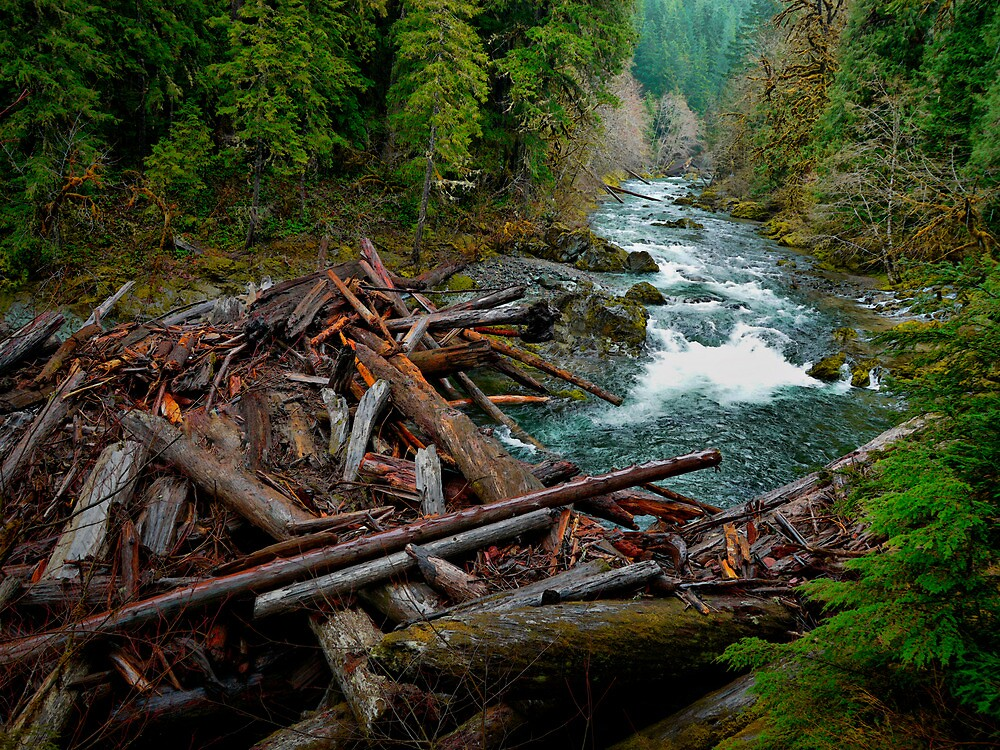 The Big Log Jam by Charles & Patricia   Harkins ~ Picture Oregon
