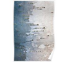 Birch Bark the First Poster
