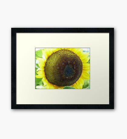 Yellow around the edges Framed Print