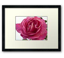 The Rose of Ramelton Framed Print
