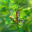 Caught in my web by jozi1