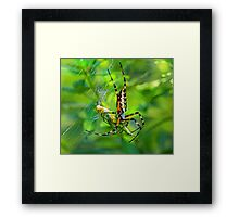 Caught in my web Framed Print