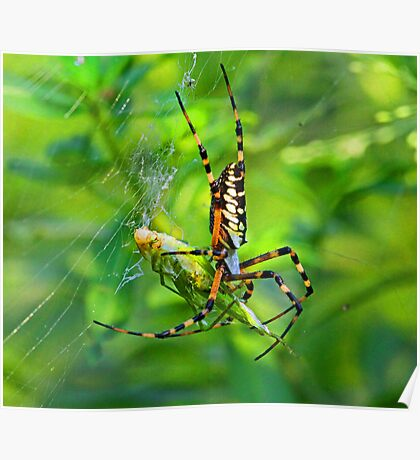Caught in my web Poster