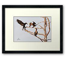 Strafing Cormorants Framed Print
