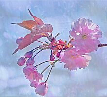 Whispering blossoms by IngeHG