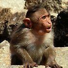 Cheeky Monkey by SerenaB