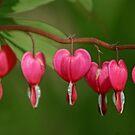 Dangling Hearts by KatMagic Photography