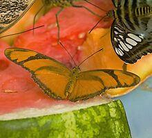 Butterfly Breakfast by Thad Zajdowicz