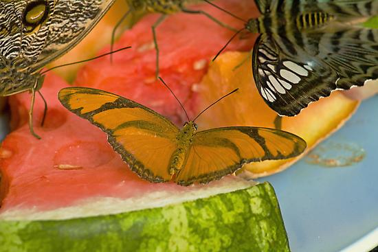 Butterfly Breakfast by Thad Zajdowicz