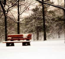 Bench on Bloor by KatMagic Photography