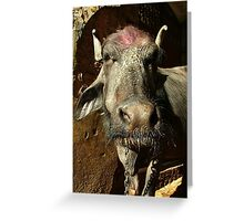 Water Buffalo with Dye on Head Greeting Card