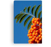 Orange tabs Canvas Print