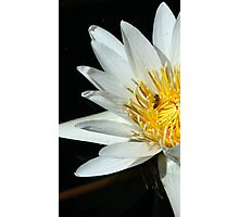 Tropical Day-Flowering Waterlily, Yellow Photographic Print