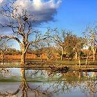 African Landscape Scene #2 by Kobus Olivier