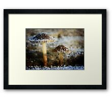 Pixie Lamps Textured Framed Print