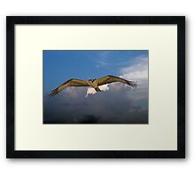 OSPREY flys right over my head Framed Print