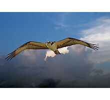 OSPREY flys right over my head Photographic Print