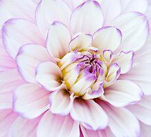 Flower petals by Lin-Ann Anantharachagan