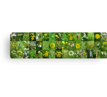 Scottish Wild Flowers in June - Yellow and White - 3x15 Canvas Print