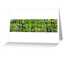 Scottish Wild Flowers in June - Yellow and White - 3x15 Greeting Card