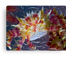 Candy Crab Canvas Print