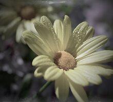 Garden Daisy by marycarnahan