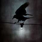 By crow light by Nicola Smith