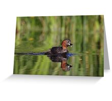 Little Grebe Greeting Card
